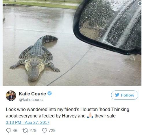 alligator-houston