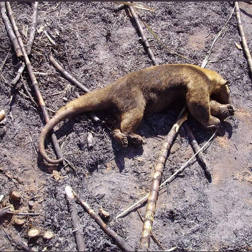 Verificamos São Antigas E Não Foram Feitas Na Amazônia
