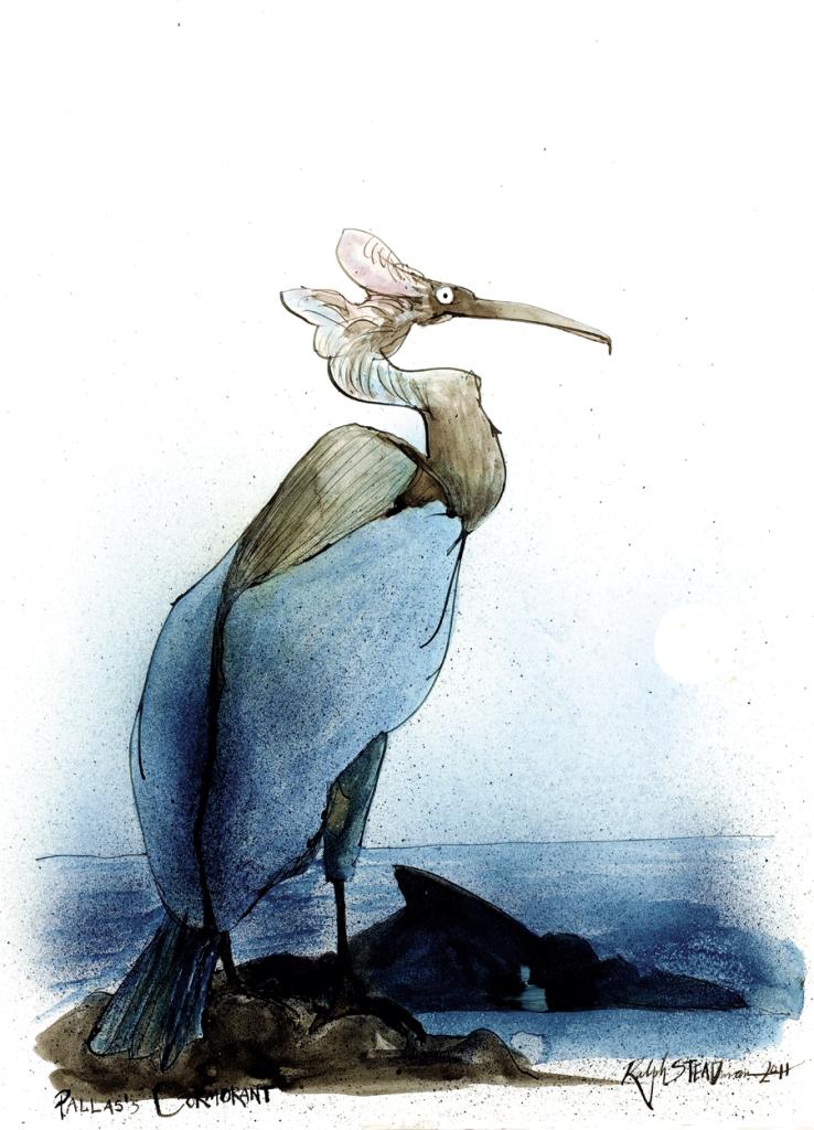 O cormorão-de-lunetas vivia na Ilha de Bering, no extremo leste da Rússia, e se extinguiu depois que ela foi colonizada no começo do século XIX. Os últimos exemplares foram avistados por volta de 1850.