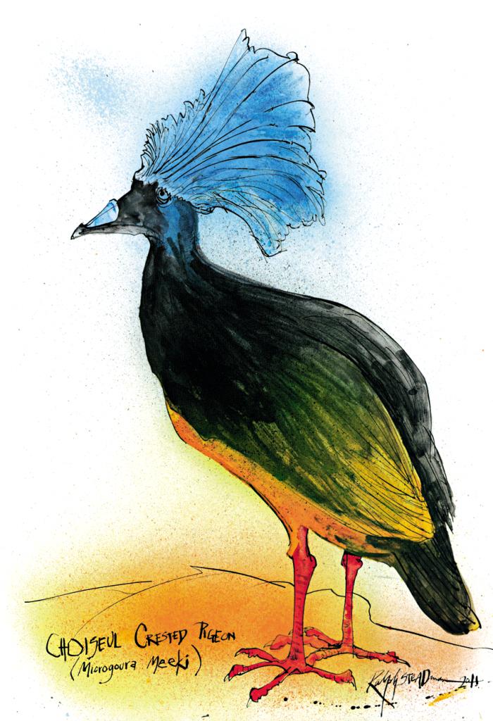 O pombo-coroado-de-Choiseul tinha o porte de uma galinha e era encontrado nas Ilhas Salomão. Extinguiu-se no início do século XX, caçado pelo homem e morto por espécies invasoras