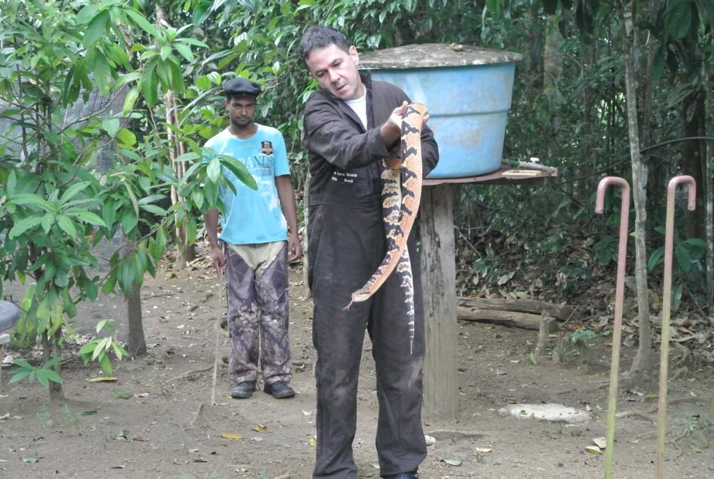 Rodrigo Souza carrega uma surucucu no Núcleo Serra Grande. Ao fundo, Cláudio Barreto dos Santos, funcionário do serpentário (foto: Bernardo Esteves)