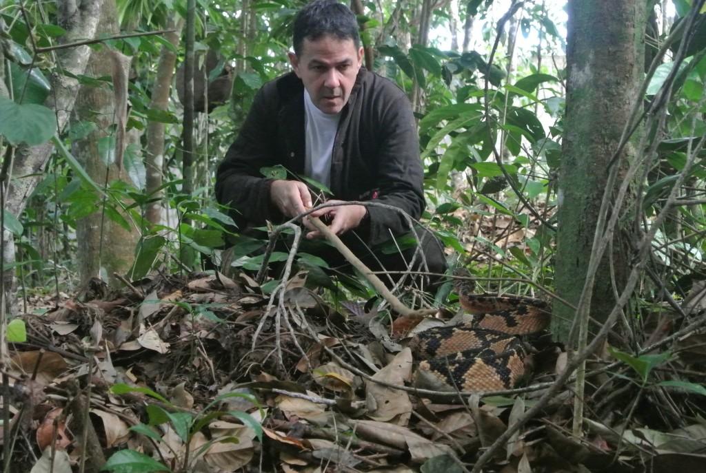 Rodrigo Souza encara uma surucucu no Núcleo Serra Grande (foto: Bernardo Esteves)