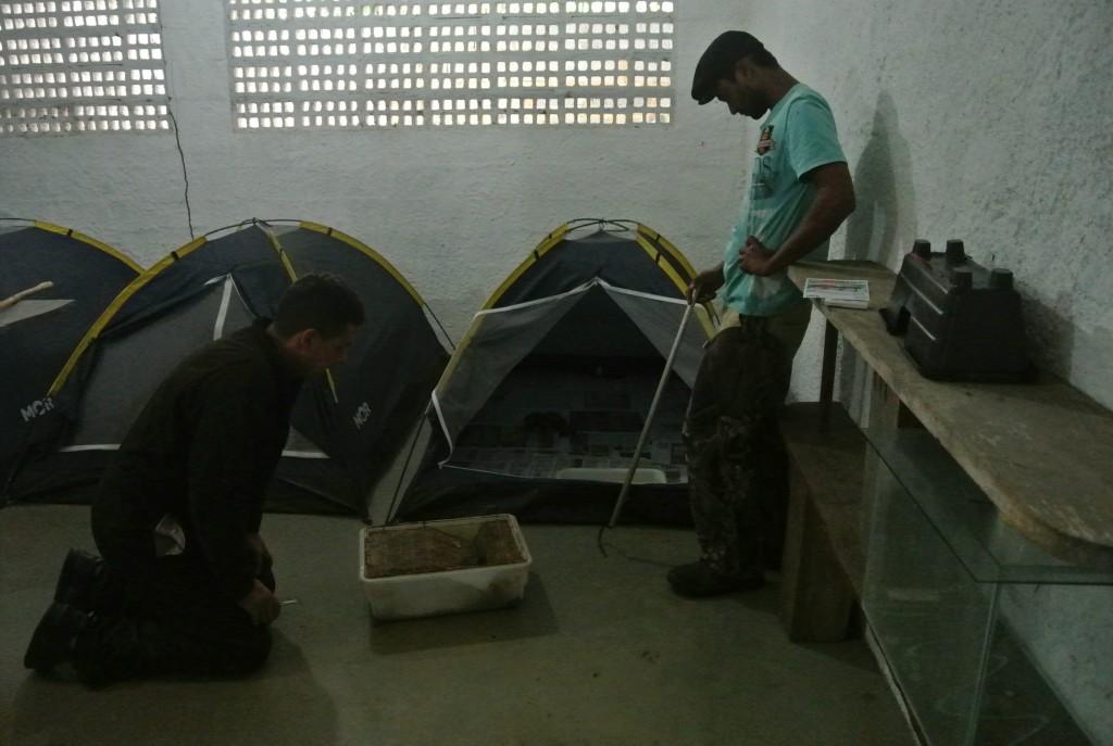 Barracas de camping na qual as surucucus são mantidas no sistema intensivo de criação no Núcleo Serra Grande (foto: Bernardo Esteves)