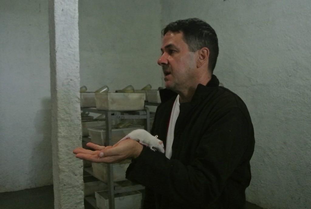 Um rato passeia pelo braço de Rodrigo Souza no biotério do Núcleo Serra Grande (foto: Bernardo Esteves)