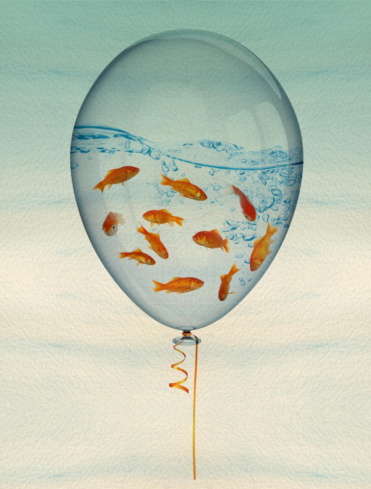 As crianças alimentariam os peixes. Os peixes trariam buena onda para a casa. O barulhinho da água disfarçaria o som da rua. A mulher do <i>feng shui</i> vibrou com a ideia do espelho d'água