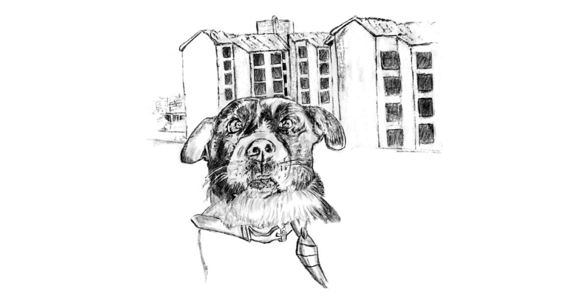 O cachorro Bob, misto de pit bull com vira-lata, em desenho feito por menino que mora em Heliópolis