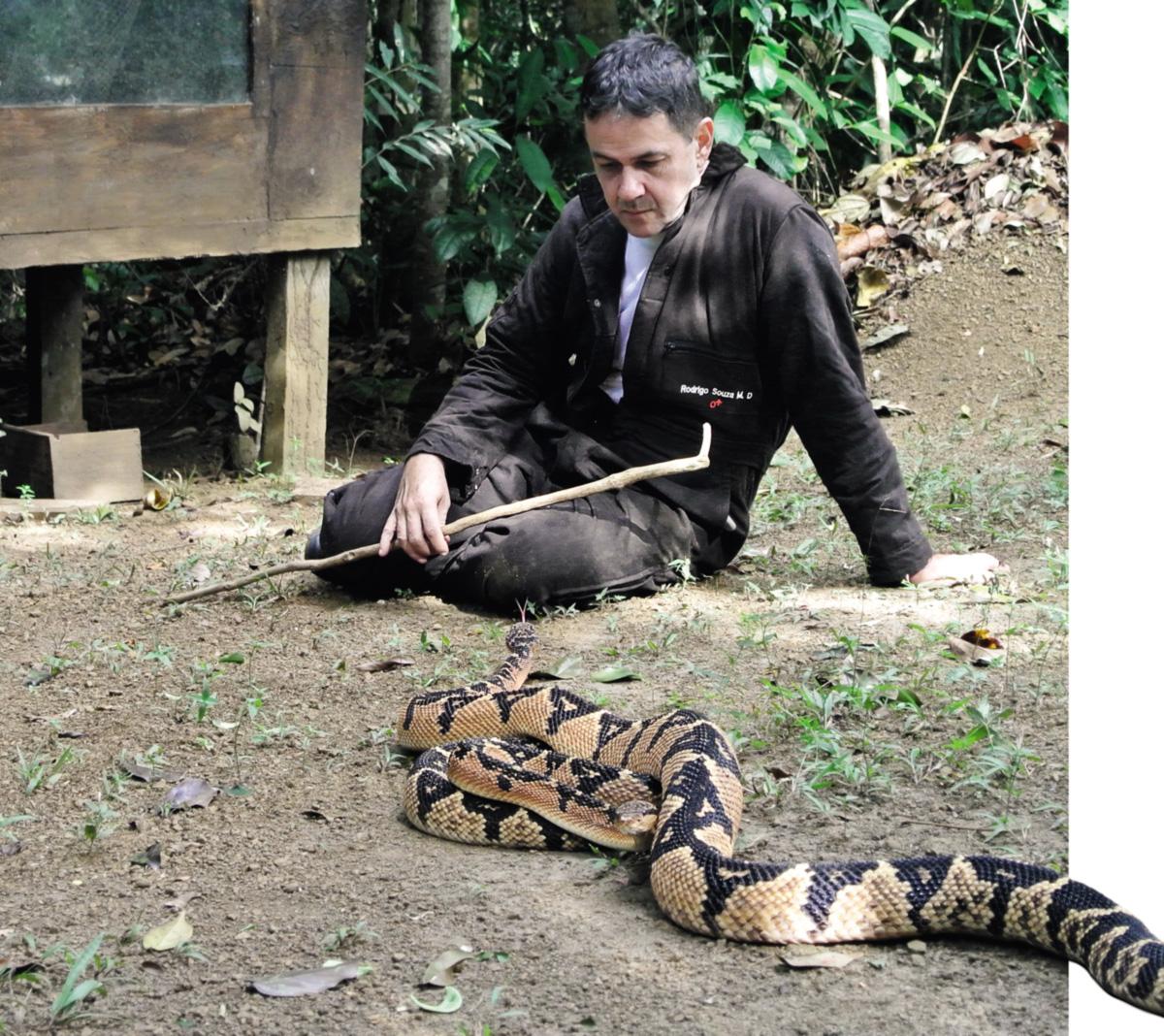 """Rodrigo Souza soltou duas surucucus numa área aberta de seu serpentário. Um macho de 2,20 metros rastejou em sua direção antes de se lançar num voo preciso rumo ao seu rosto. """"Não estou entendendo exatamente o que está acontecendo"""""""