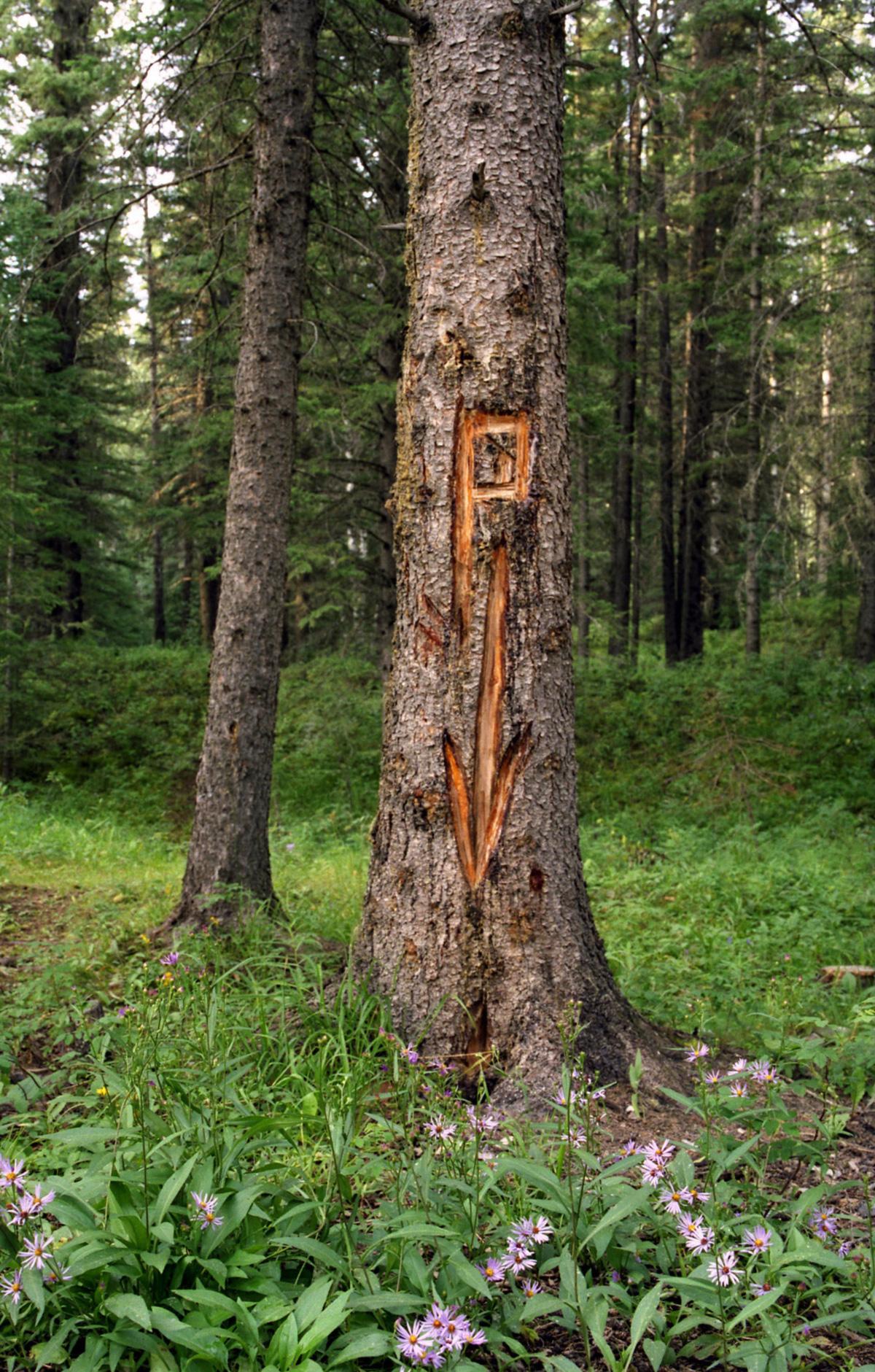"""Nenhuma área de acampamento canadense estaria completa sem a sua """"árvore para xixi"""", cujo nome é auto-explicativo. Seu uso está integrado ao pensamento e modos daqueles que acampam: aproximar a humanidade da natureza."""