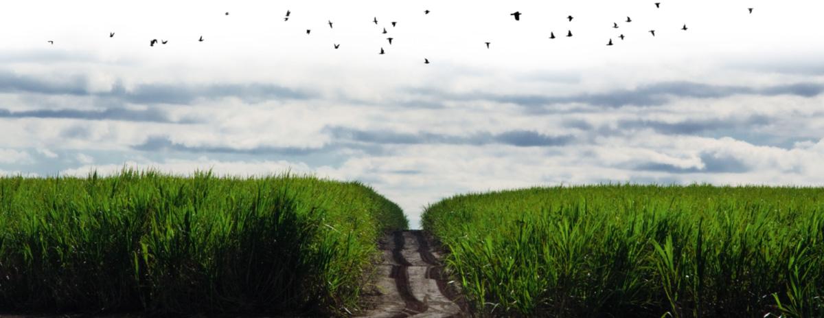 """O presidente Lula empunhou a bandeira do """"combustível verde-amarelo"""" quando a produção de cana dobrou para 600 milhões de toneladas, depois do aparecimento dos carros flex nas ruas do país, em 2003. Com a descoberta do pré-sal, o governo esqueceu do álcool. """"Seremos o país do etanol de cana que compra etanol de milho"""", prevê um dirigente do setor"""