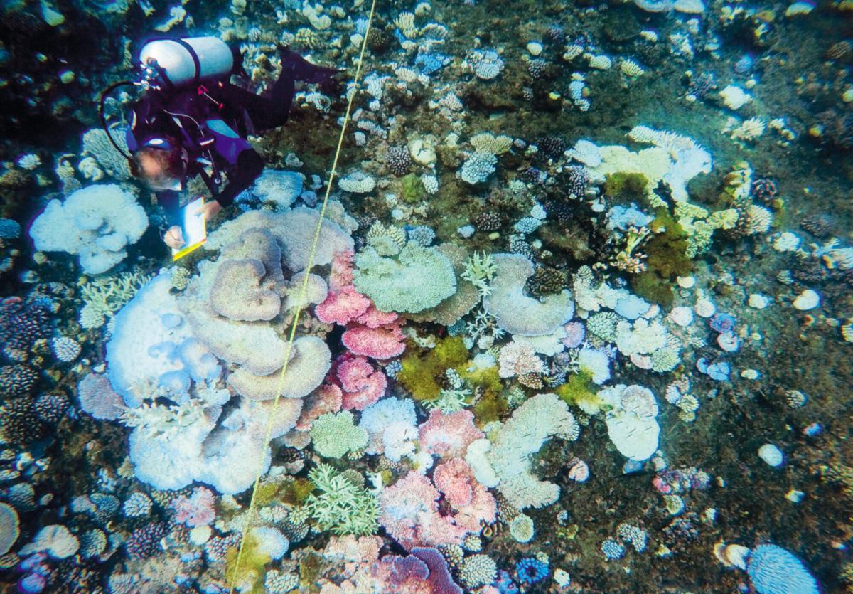 A Grande Barreira de Corais da Austrália abriga uma fabulosa variedade de vida. Tem biodiversidade maior do que a de toda a Europa