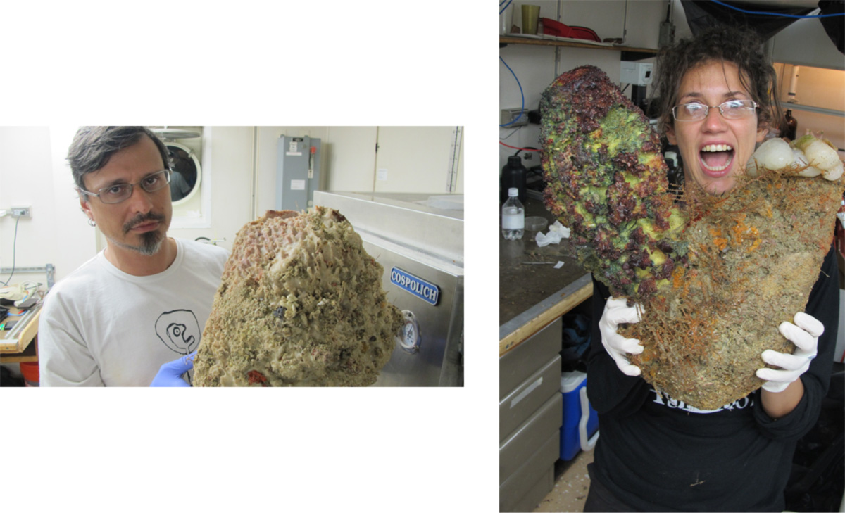 Rodrigo Moura e Nara Lina Oliveira seguram esponjas coletadas durante a expedição de 2012 à foz do Amazonas. Uma delas chegava a pesar 200 kg