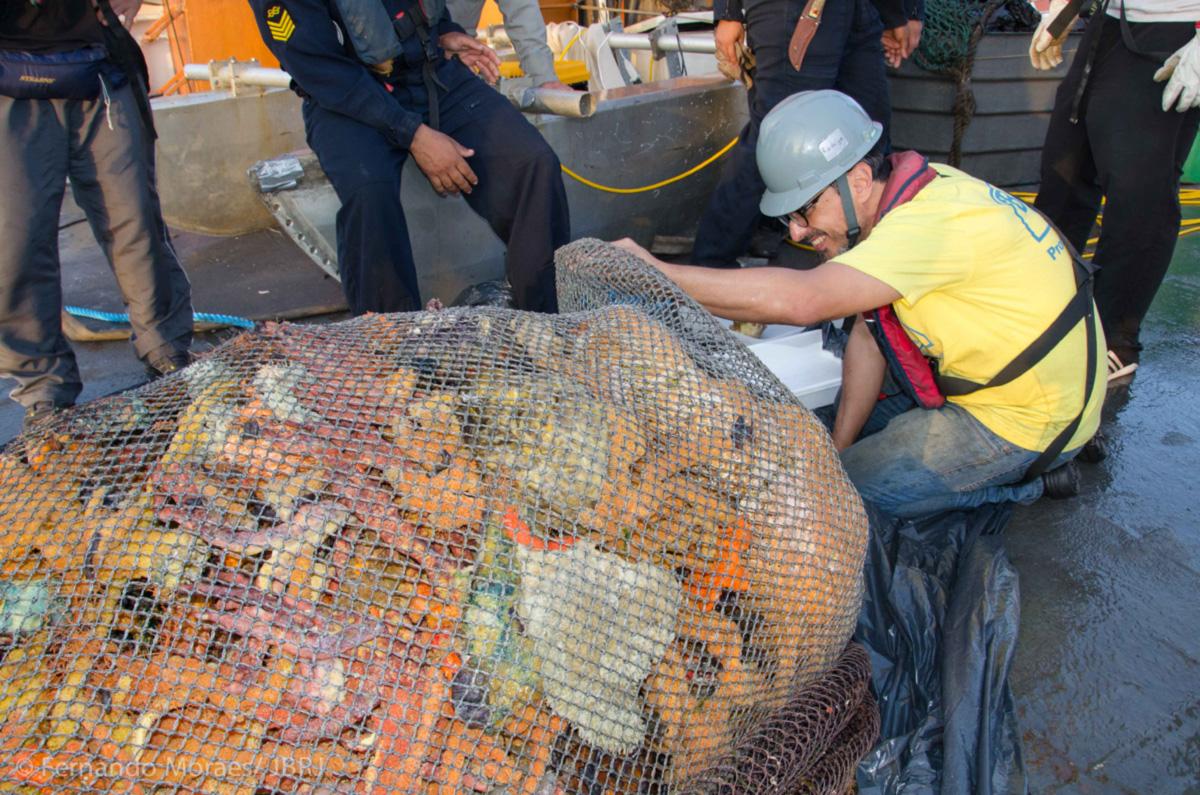 Rodrigo Moura confere esponjas e material calcário recolhido num arrasto durante a expedição no Cruzeiro do Sul. As redes traziam quase uma tonelada de materia