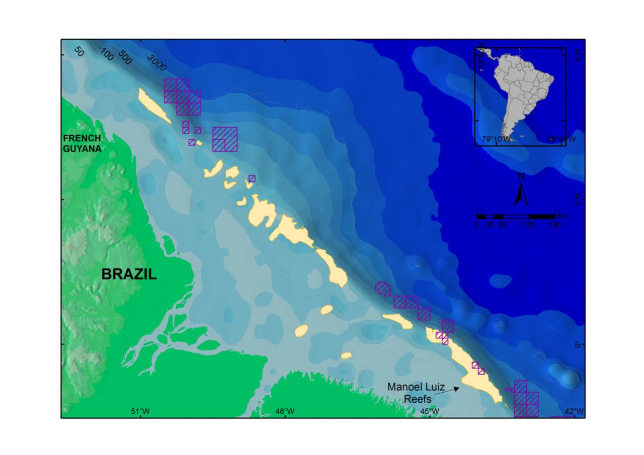 O mapa montado pelos pesquisadores mostra que há superposição entre a área ocupada pelo recife da foz do Amazonas (em amarelo) e os blocos exploratórios de petróleo licitados em 2013 (hacuhrados em lilás)