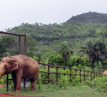 A viagem das elefantas