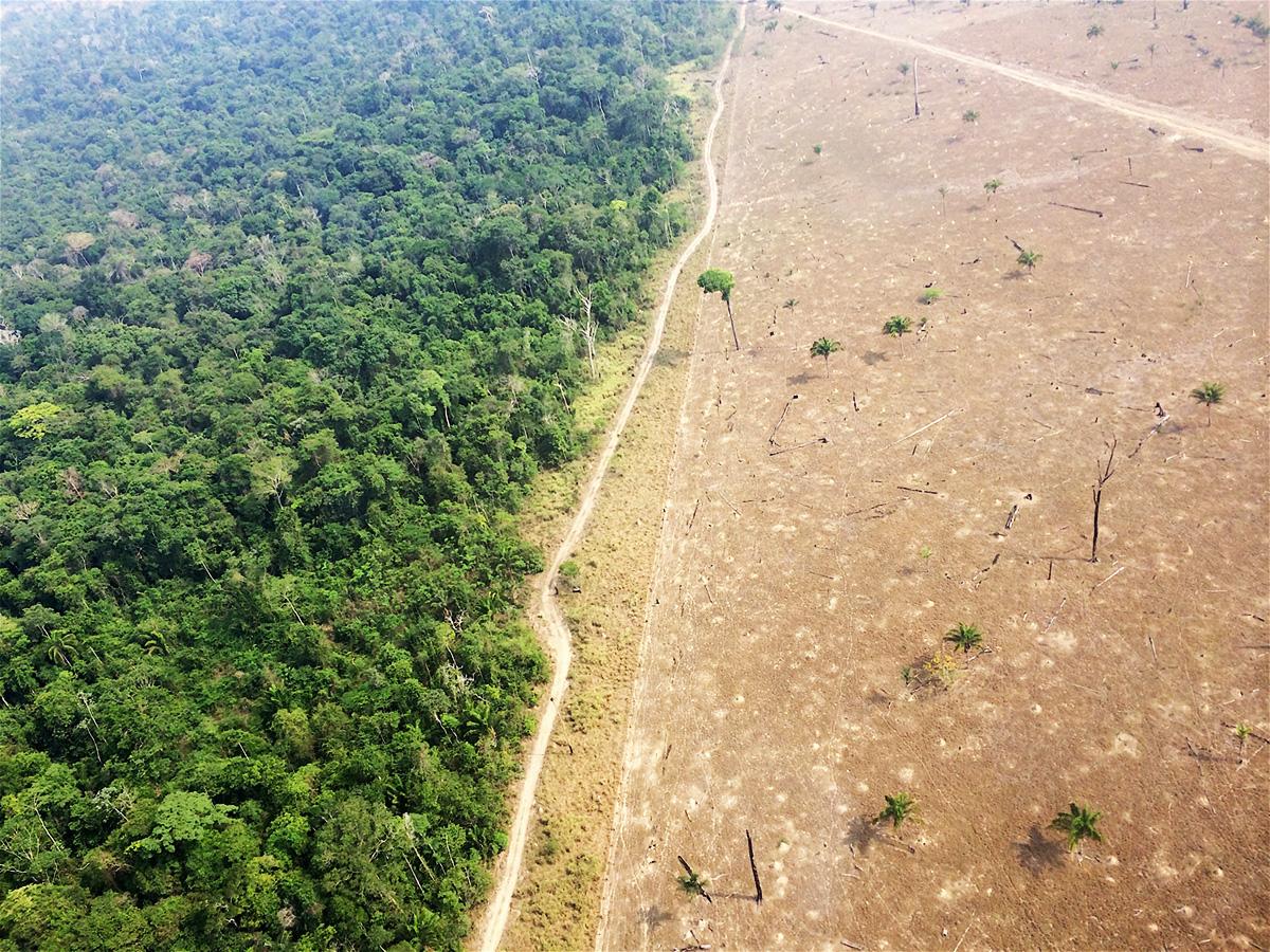 Vista aérea do desmatamento na área próxima a Novo Progresso.