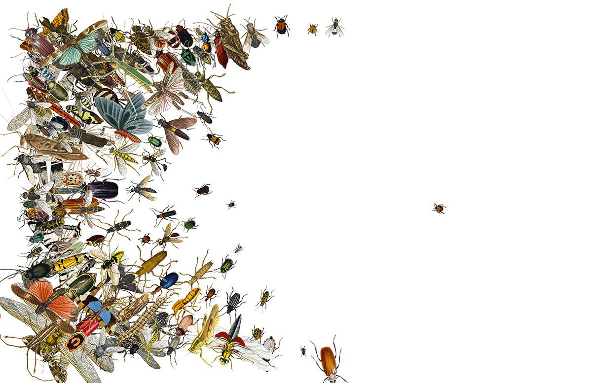 Cientistas tentaram calcular os benefícios que os insetos produzem. Trilhões deles polinizam cerca de três quartos de nossas colheitas, serviço que chega a valer 500 bilhões de dólares por ano