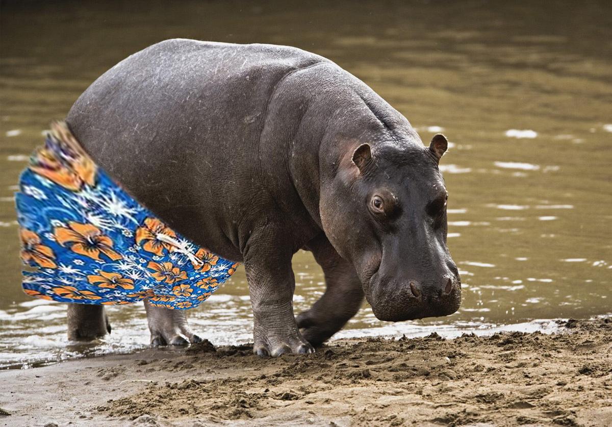 Pela nova regra, os hipopótamos só poderão sair da lama depois do horário comercial