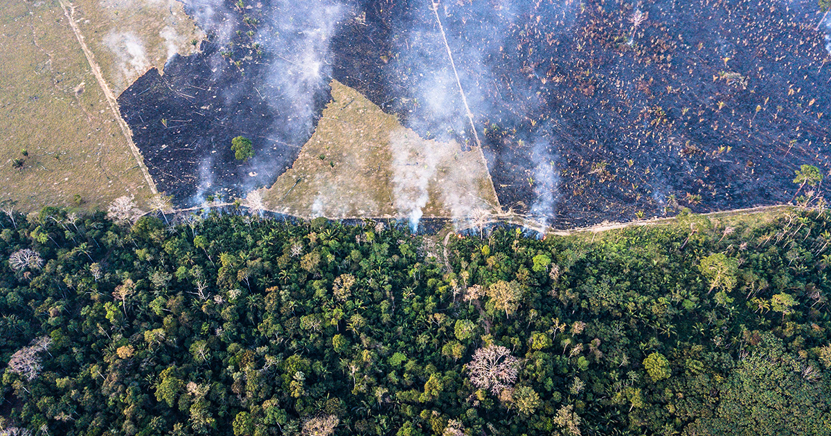 Vista do alto, a Terra Indígena Karipuna ao lado de área de plantação, com focos de queimadas –
