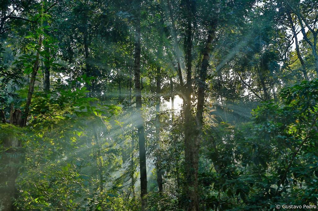 Algumas das árvores do local chegam a 20 metros de altura