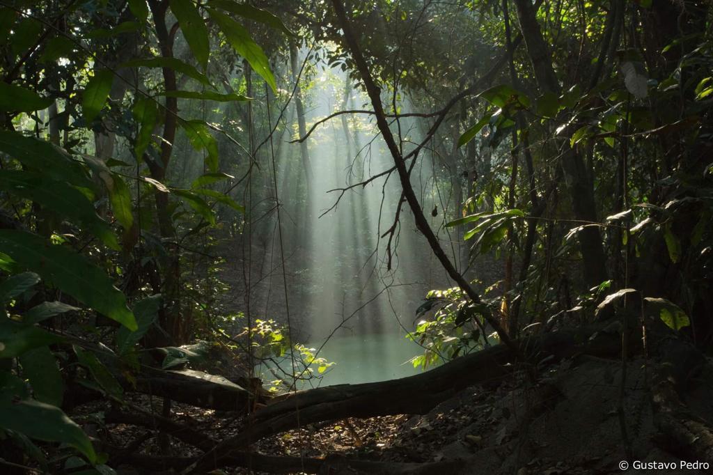 Por ficar numa região de planíce, a Floresta abriga pequenos lagos, utilizados por jacarés, capivaras e por uma espécie raríssima chamada de