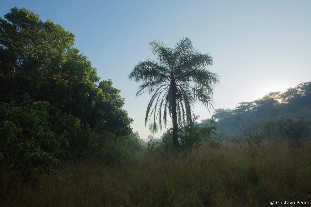A maior parte da vegetação do Camboatá é secundária: ou seja, de árvores nativas da Mata Atlântica, que cresceram sobre áreas antes desmatadas