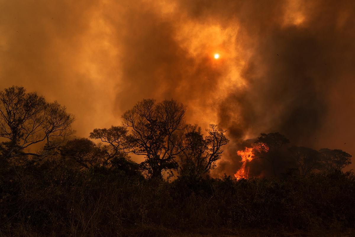 Chamas na mata em Poconé, Mato Grosso, em 19 de agosto de 2020