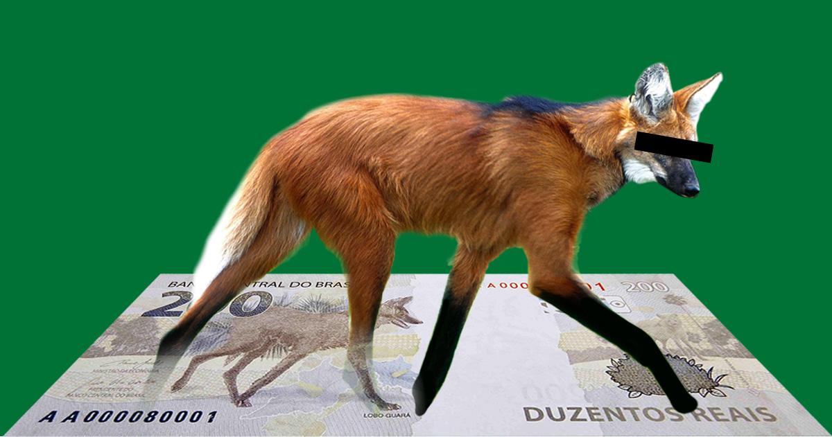 A história secreta do lobo-guará