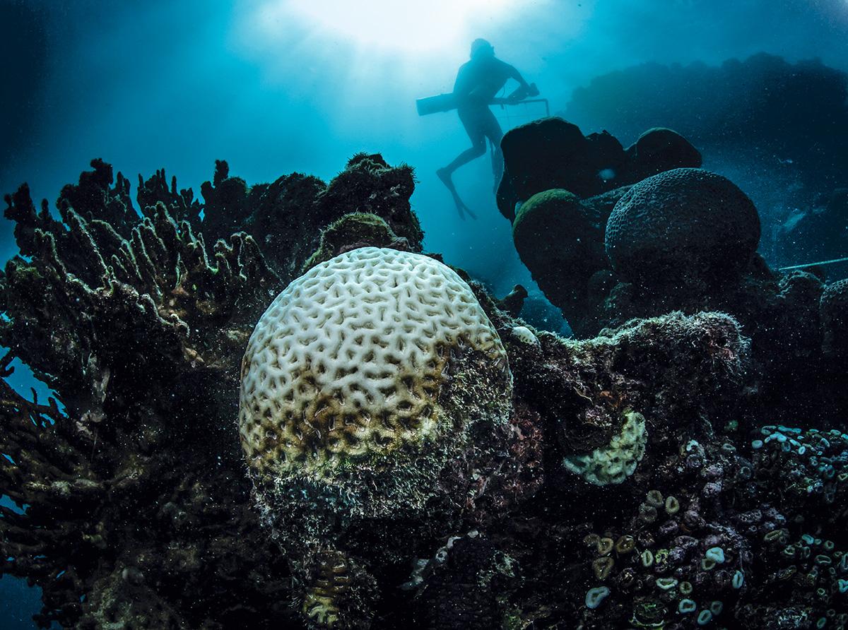Corais branqueados ou mortos devido ao aquecimento da água no Parque Nacional Marinho dos Abrolhos: em 2019, após a maior onda de calor na região, pesquisadores registraram a mortalidade em massa de corais-de-fogo (à esquerda, ao fundo) –