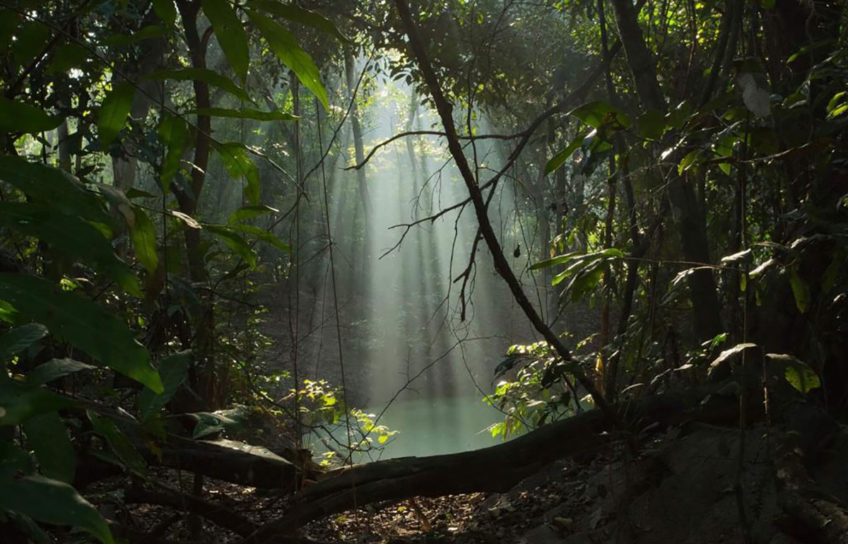 A Floresta do Camboatá resiste