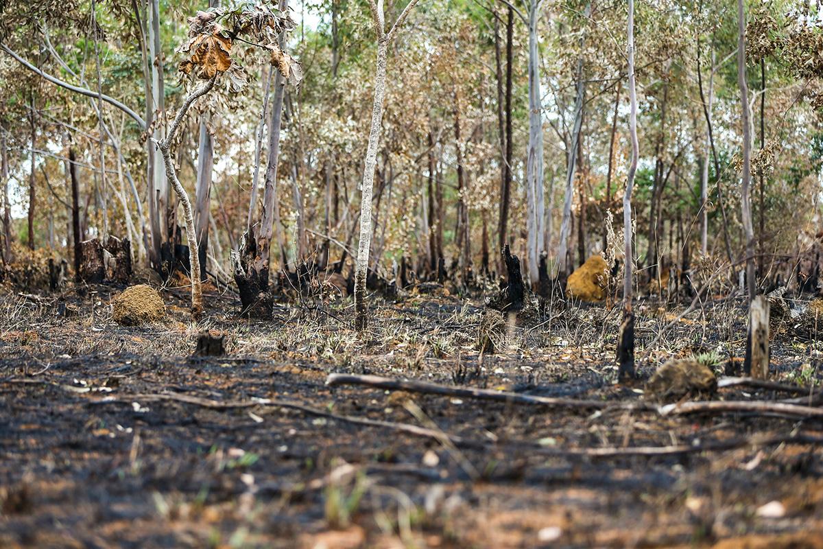Queimada na Amazônia: anúncio de mudança no sistema de monitoramento provocou reação de pesquisadores –